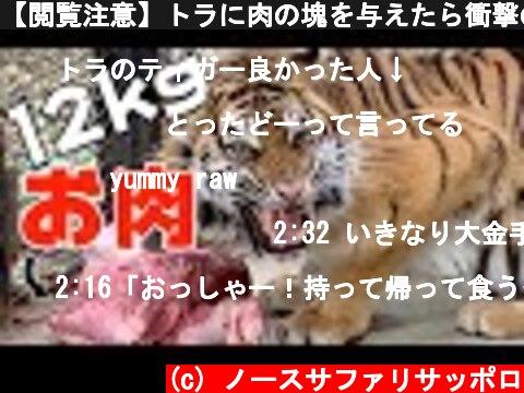【閲覧注意】トラに肉の塊を与えたら衝撃の結末!!Tiger got 12kg meat !!  (c) ノースサファリサッポロ