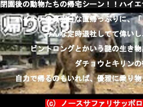 閉園後の動物たちの帰宅シーン!!ハイエナの帰宅が衝撃すぎた・・Hyenas return home  (c) ノースサファリサッポロ