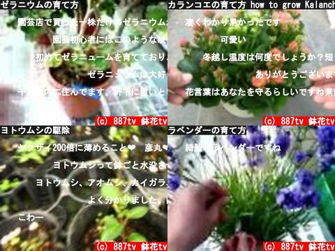 887tv 鉢花tv(おすすめch紹介)