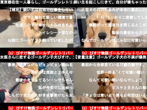 びすけ物語ゴールデンレトリバー(おすすめch紹介)