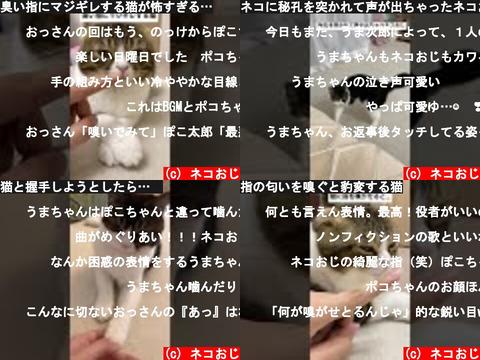 ネコおじ(おすすめch紹介)