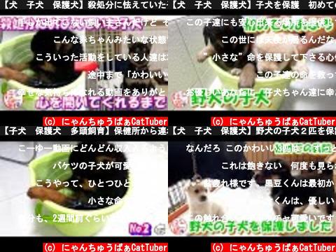 にゃんちゅうばぁCatTuber(おすすめch紹介)