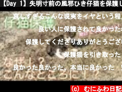 【Day 1】失明寸前の風邪ひき仔猫を保護しました。English captions【Rescue kitten】Protected a dying kitten with a cold.  (c) むにふわ日記