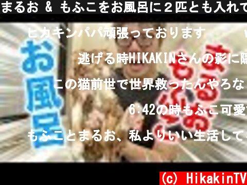 まるお & もふこをお風呂に2匹とも入れてみたら超大変だったwww  (c) HikakinTV