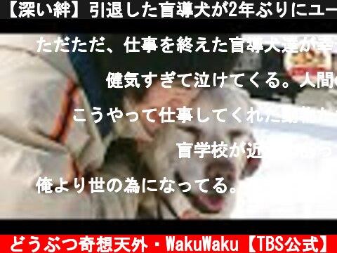 【深い絆】引退した盲導犬が2年ぶりにユーザーの家に里帰り…奇跡の出来事【どうぶつ奇想天外/WAKUWAKU】  (c) どうぶつ奇想天外・WakuWaku【TBS公式】