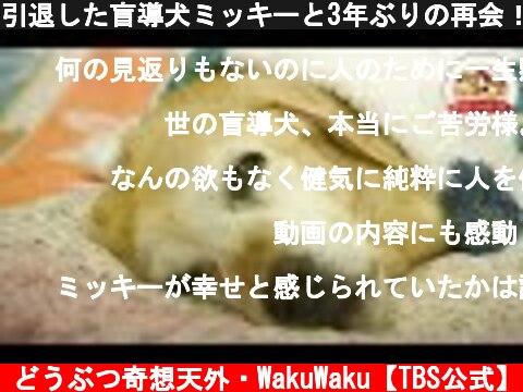 引退した盲導犬ミッキーと3年ぶりの再会!その時、老犬に驚くべき変化が…(盲導犬ミッキーの物語・後編)【北海道盲導犬協会】【どうぶつ奇想天外/WAKUWAKU】  (c) どうぶつ奇想天外・WakuWaku【TBS公式】