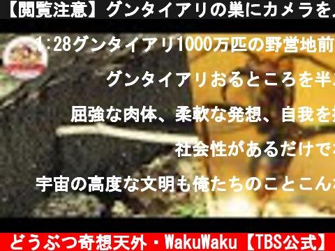 【閲覧注意】グンタイアリの巣にカメラを入れてみた!1000万匹の黒い塊の中には…!【ジャングル最恐の生物】【どうぶつ奇想天外/WAKUWAKU】  (c) どうぶつ奇想天外・WakuWaku【TBS公式】