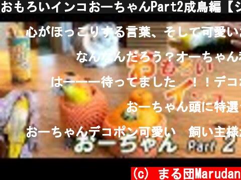 おもろいインコ(おすすめ動画)