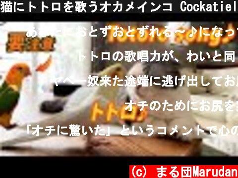 猫にトトロを歌うオカメインコ(おすすめ動画)