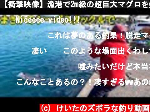 【衝撃映像】漁港で2m級の超巨大マグロを釣り上げた!!  (c) けいたのズボラな釣り動画