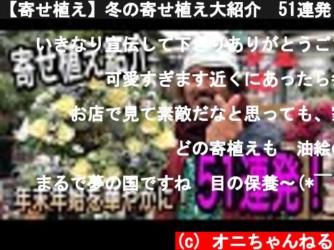 【寄せ植え】冬の寄せ植え大紹介 51連発!  (c) オニちゃんねる