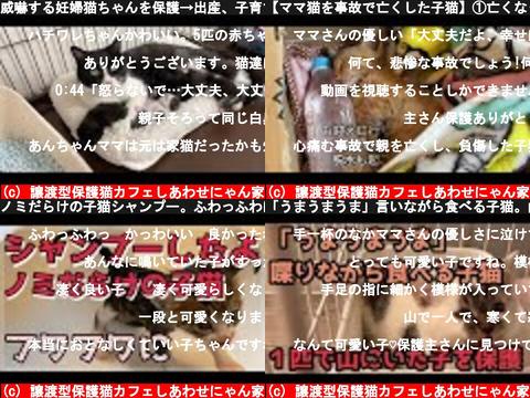 譲渡型保護猫カフェしあわせにゃん家(おすすめch紹介)