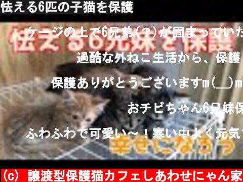 怯える6匹の子猫を保護  (c) 譲渡型保護猫カフェしあわせにゃん家