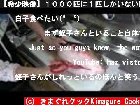 【希少映像】1000匹に1匹しかいないBIGトラフグのお腹の中身は?たまご?しらこ?  (c) きまぐれクックKimagure Cook