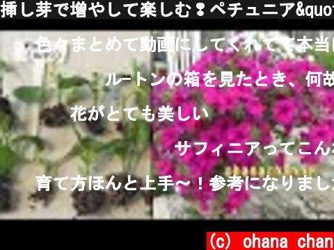 """挿し芽で増やして楽しむ❢ペチュニア""""サフィニア""""🌱How to grow Petunia, """"Surfinia"""" from Cuttings🌱  (c) ohana chan"""
