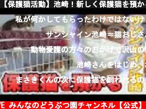 【保護猫活動】池崎!新しく保護猫を預かる!【サンシャイン池崎】  (c) I LOVE みんなのどうぶつ園チャンネル【公式】