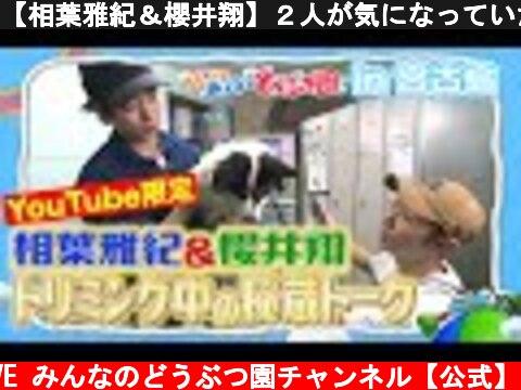 【相葉雅紀&櫻井翔】2人が気になっていたあの人のモノマネ/秘蔵トークin宮古島【YouTube限定】Masaki Aiba & Sho Sakurai  Rescued Dog trimming  (c) I LOVE みんなのどうぶつ園チャンネル【公式】