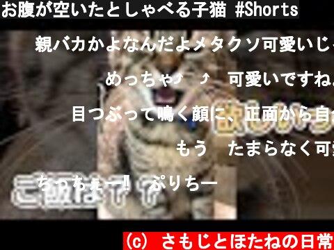 お腹が空いたとしゃべる子猫 #Shorts  (c) さもじとほたねの日常