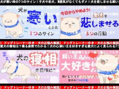 ドッグトレーナーゆき・犬のお悩み解説(おすすめch紹介)
