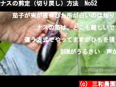 ナスの剪定(切り戻し)方法 No52  (c) 三和農園