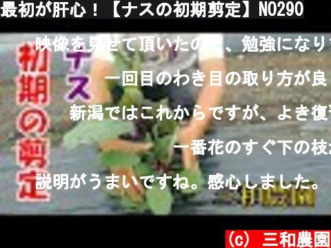 最初が肝心!【ナスの初期剪定】NO290  (c) 三和農園