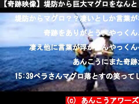 【奇跡映像】堤防から巨大マグロをなんと【2匹】釣り上げた!!!!!【八丈島♯3】  (c) あんこうアワーズ