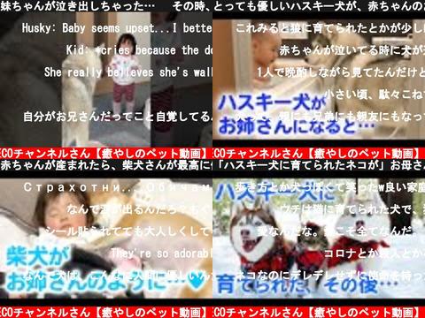 PECOチャンネルさん【癒やしのペット動画】(おすすめch紹介)