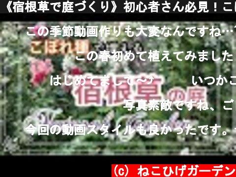 《宿根草で庭づくり》初心者さん必見!こぼれ種でも増える丈夫な春咲き宿根草12種をご紹介!  (c) ねこひげガーデン