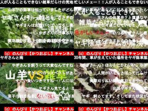 のんびり【かつおぶし】チャンネル(おすすめch紹介)