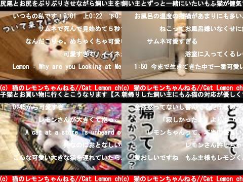 猫のレモンちゃんねる//Cat Lemon ch(おすすめch紹介)