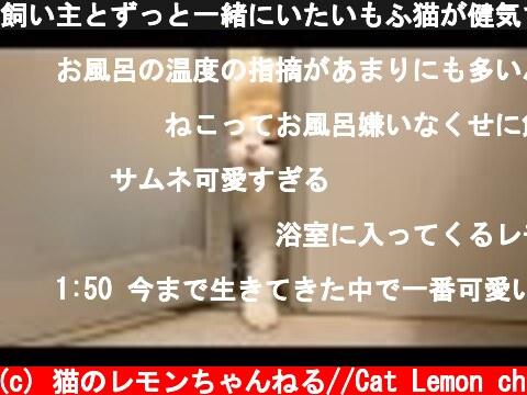 飼い主とずっと一緒にいたいもふ猫が健気で可愛すぎる  (c) 猫のレモンちゃんねる//Cat Lemon ch