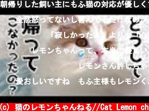 朝帰りした飼い主にもふ猫の対応が優しくて泣ける  (c) 猫のレモンちゃんねる//Cat Lemon ch
