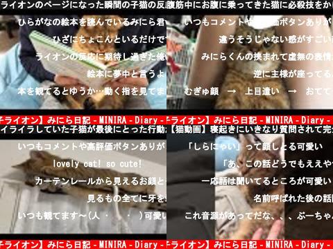 【子ライオン】みにら日記‐MINIRA‐Diary‐(おすすめch紹介)