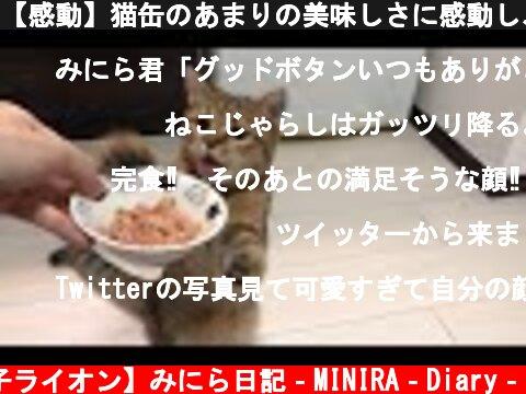 【感動】猫缶のあまりの美味しさに感動し、ヨリ目になってしまった子猫  (c) 【子ライオン】みにら日記‐MINIRA‐Diary‐