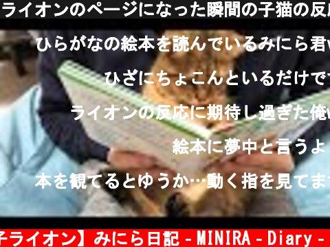 ライオンのページになった瞬間の子猫の反応が面白いwww  (c) 【子ライオン】みにら日記‐MINIRA‐Diary‐