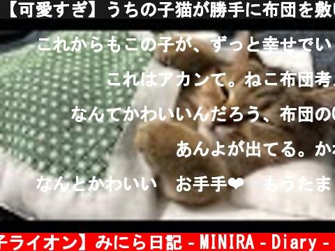 【可愛すぎ】うちの子猫が勝手に布団を敷いて寝てました。  (c) 【子ライオン】みにら日記‐MINIRA‐Diary‐