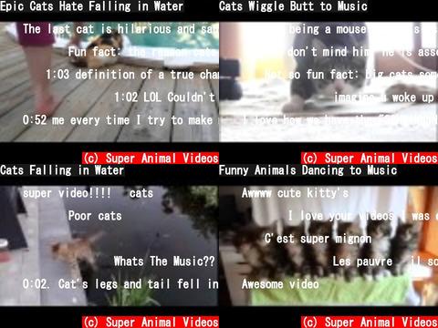 Super Animal Videos(おすすめch紹介)