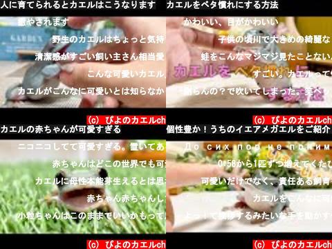 ぴよのカエルch(おすすめch紹介)