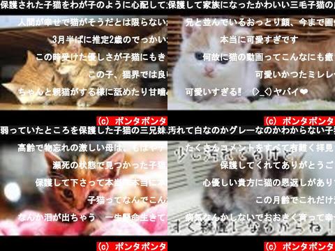 ポンタポンタ(おすすめch紹介)