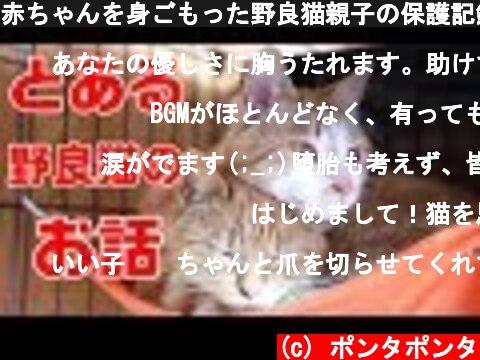 赤ちゃんを身ごもった野良猫親子の保護記録① 保護から無事に子猫が産まれるまで  (c) ポンタポンタ