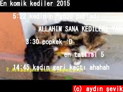 En komik kediler 2015  (c) aydın şevik