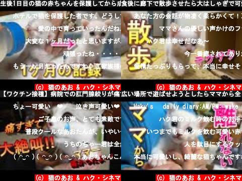 猫のあお & ハク・シネマ(おすすめch紹介)