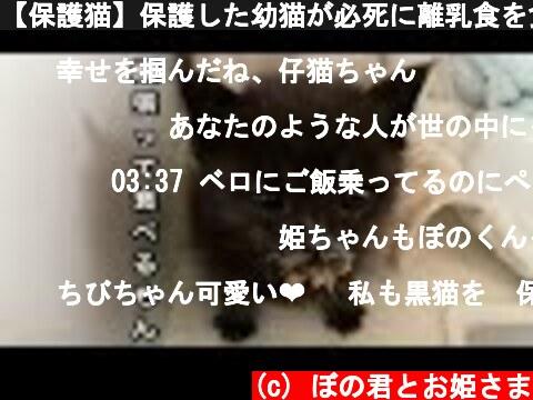 【保護猫】保護した幼猫が必死に離乳食を食べる姿が可愛すぎる‼︎  (c) ぼの君とお姫さま