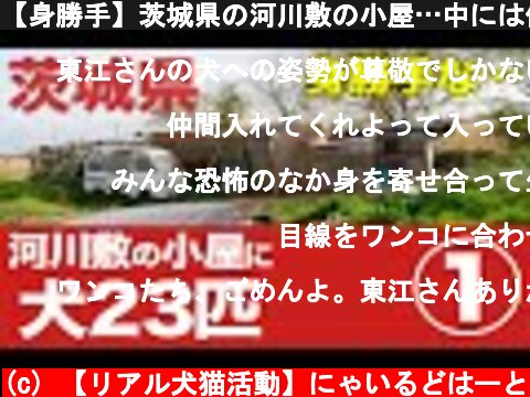 【身勝手】茨城県の河川敷の小屋…中には保護が必要な犬23匹①#387  (c) 【リアル犬猫活動】にゃいるどはーと