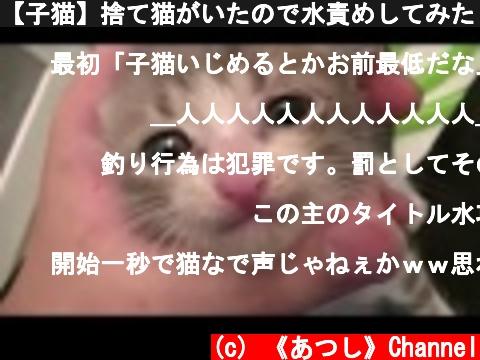 捨て猫を水責めにする(おすすめ動画)