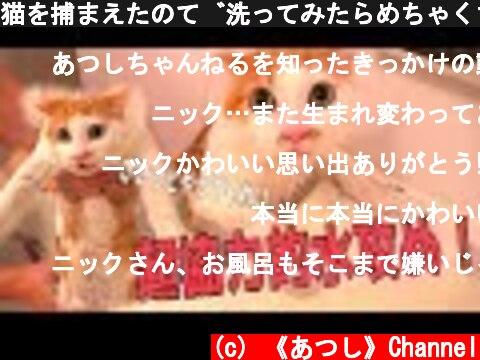 猫を捕まえたので洗ってみたらめちゃくちゃ協力的だったwww  (c) 《あつし》Channel