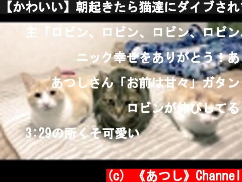 【かわいい】朝起きたら猫達にダイブされました  Cats jumping into the owner to wake up  (c) 《あつし》Channel