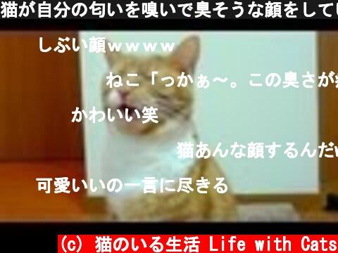 猫が自分の匂いを嗅いで臭そうな顔をしている【猫 フレーメン】  (c) 猫のいる生活 Life with Cats