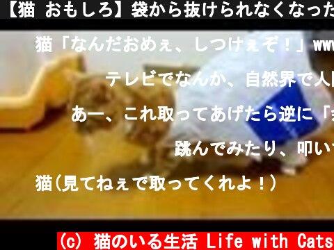 【猫 おもしろ】袋から抜けられなくなった猫がおもしろい - the cat blunders with plastic bag -  (c) 猫のいる生活 Life with Cats