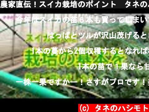 農家直伝!スイカ栽培のポイント タネのハシモト  (c) タネのハシモト